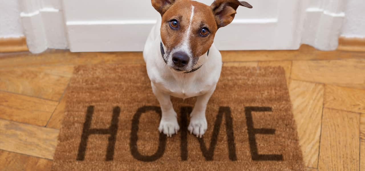 3 - Dog in a New Home